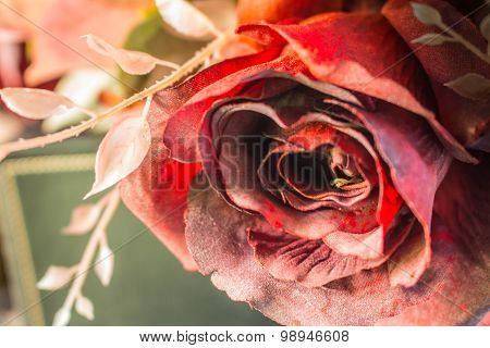 Red Roses In Top View.