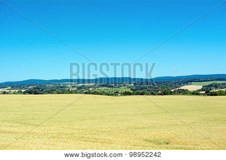 Corn Field With Mountains In The Background