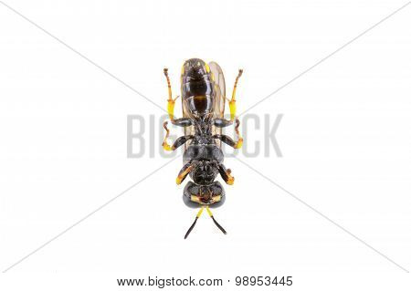 Black Insect On The White Background