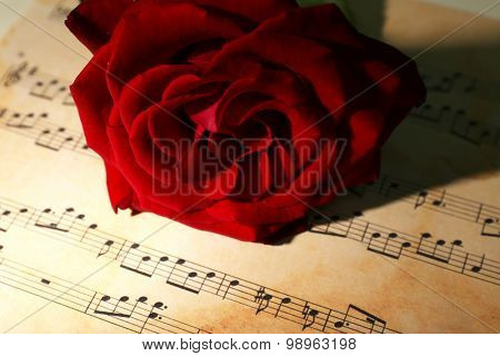 Beautiful red rose on music sheets, closeup