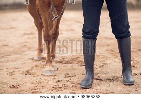 Horse And Equestrian