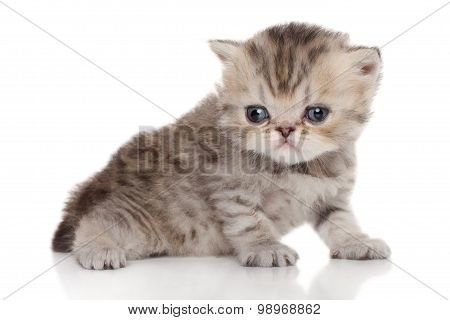 Persian Kitten On A White Background