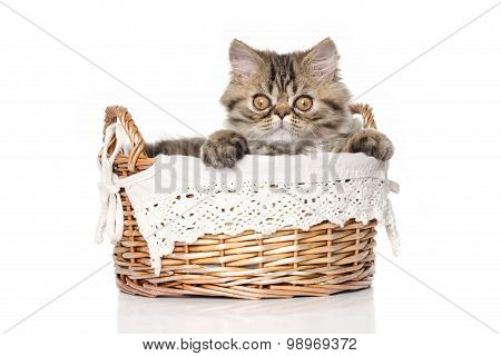 Persian Cat In Basket On White Background
