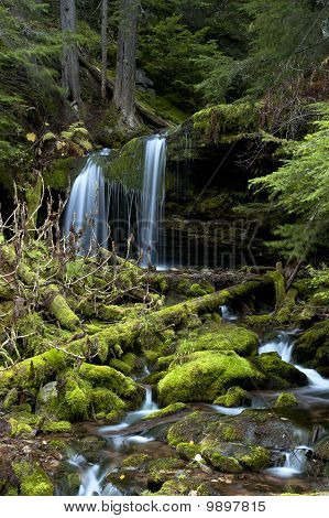 Moss covered rocks in stream.
