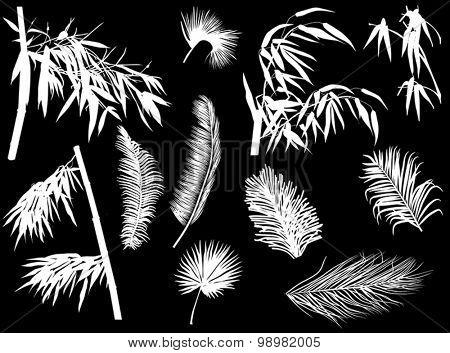 illustration with branches silhouettes isolated on black background