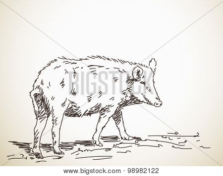 Pig Vector Sketch Hand drawn illustration