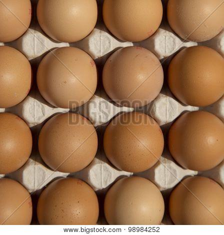 Top view of brown egg in cardboard