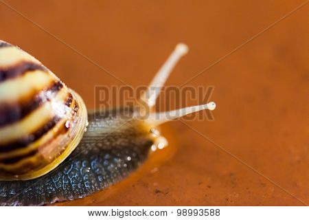 Snail Crawling On The Floor