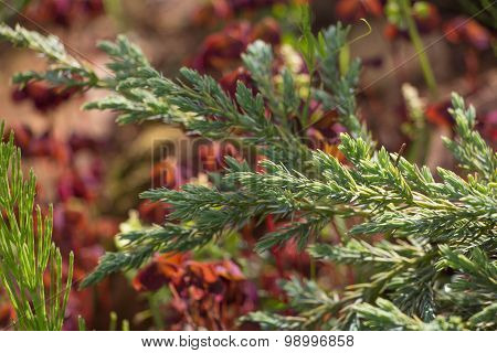 Juniper Tree Green Carpet On Multicolor Background
