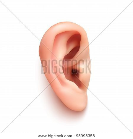 Realistic ear.