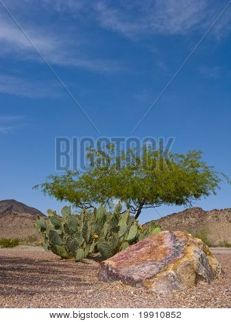 Arizona Backyard in Spring