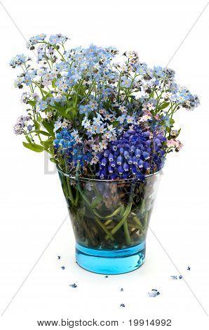Flores miosótis em um vidro transparente azul sobre um fundo branco