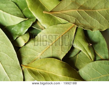 Green Bay Leaves