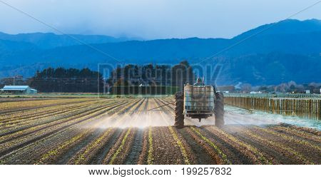 Newly planted crop of vegetables getting a early morning spray.