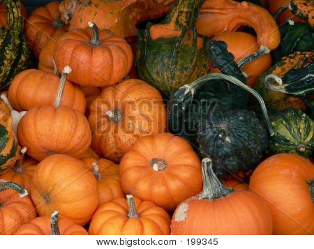 Plants  Pumpkins 001