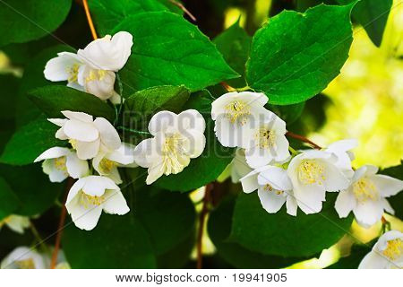 Find Artificial Flowers Jasmine