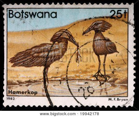 Botswana - Circa 1982: A 25-thebe Stamp Printed In Botswana Shows A Hunting Pair Of Hamerkop Birds,