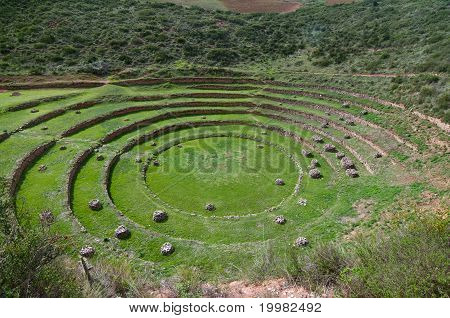 Agriculture experiment of the Incas