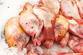 Red Tilapia Snapper Fish On Ice For Sale In Market poster