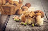 Ceps Mushroom Boletus over Wooden Background. Autumn Boletus edulis Mushrooms close up on wood rusti poster