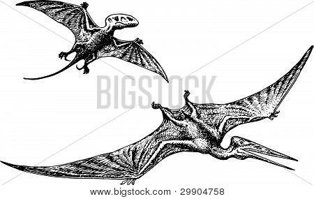 Dinossauro Pterodactyl ou Pteranodon