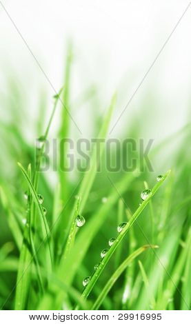 water droplets on green grass (selective DOF); Series A5