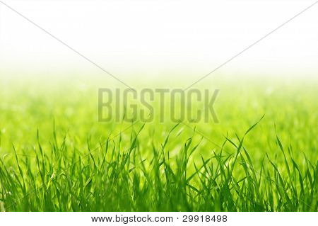 green grass in a field with copy-space (shallow DOF); spring series E