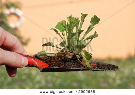 Digging Weed