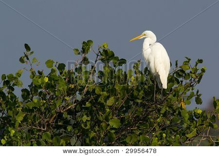 Egret bird resting on a perch