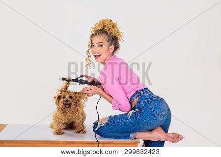 poster of Dog Grooming. Pet Salon. Petshop. Dog Salon. Beauty Salon For Animals. Grooming Master Making Dog Ha