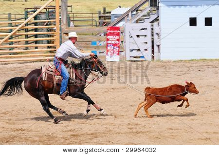 BOULDER - AUGUST 27th: unidentified cowboy rides in the calf roping competition at Jefferson County Fair and Rodeo on august 27, 2011 in Boulder, Montana