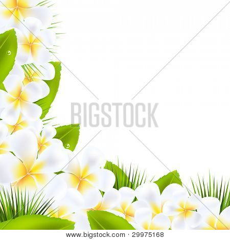 Frangipani Flowers Borders With Leaf, Vector Illustration