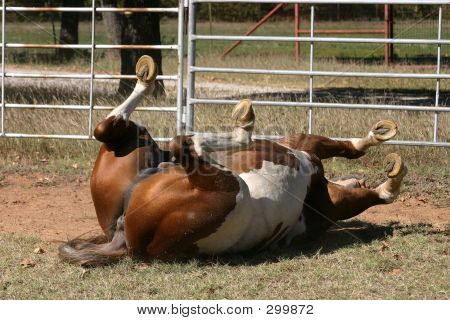 Rolling Horse