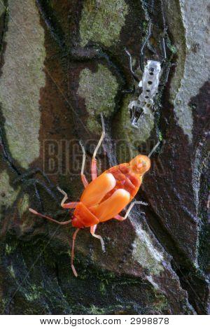 Newly Skinned Fire Bug