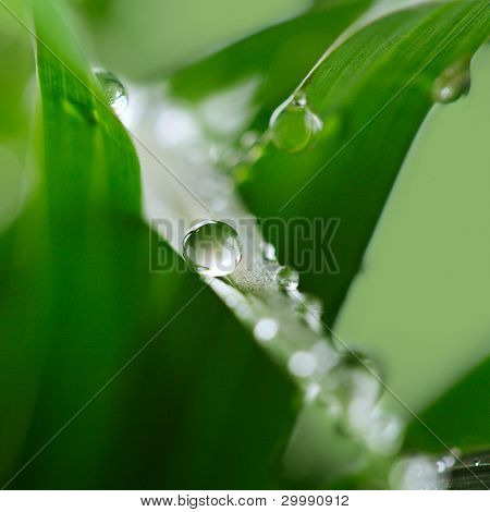 Fresh green grass with water drop. (Shallow Dof)