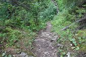 Photo Mountain Paths In The Forest.way With A Difficult Descent And Ascent.path Of Sand And Stones.a poster