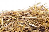 picture of manger  - a pile of straw on a white background - JPG
