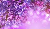 Lilac flowers bunch violet art design background. Beautiful violet color Lilac flower closeup. Water poster
