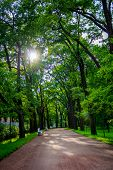 Alley Green In The Park. Background Summer Park. Russian Well-groomed Park. Beautiful Alleys Of The  poster
