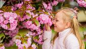Get Rid Of Seasonal Allergy. Child Enjoy Life Without Allergy. Sniffing Flowers. Girl Enjoying Flora poster