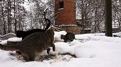 In The Snow Season, Homeless Cats Run In The Snow. poster
