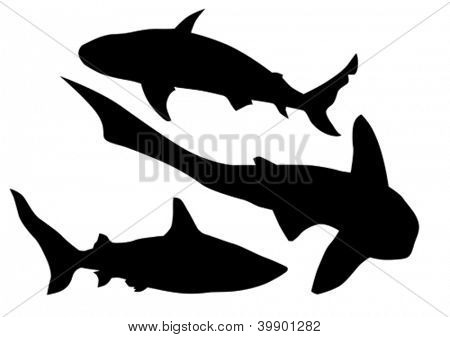 Vector drawing silhouette of a large shark