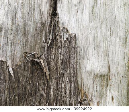 Stripped Tree Bark, close-up