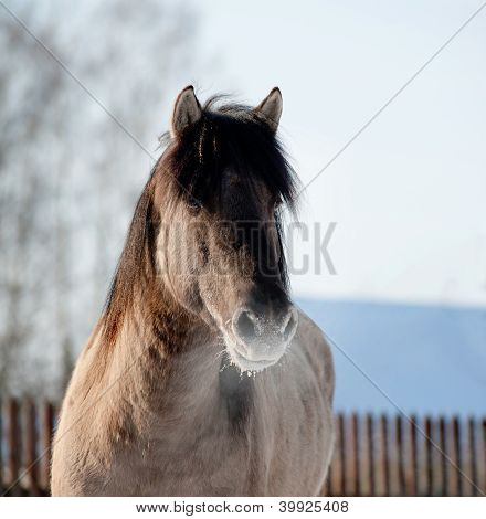 Horse In Winter