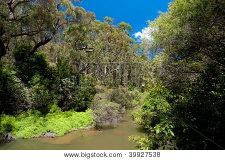 Australian River Landscape