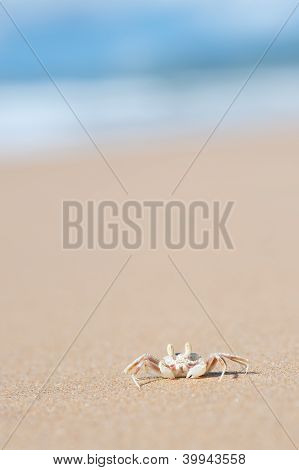 Ghost Crab - Moonee Beach, Australia