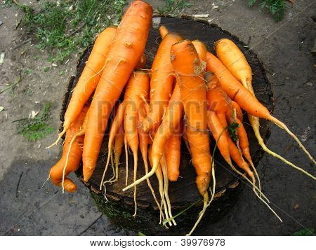 a lot of carrots