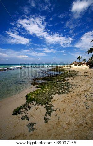 Beach Rock And Stone Cabin And Palm In  Republica Dominicana