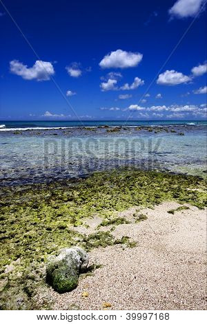 Beach Rock And Stone In  Republica Dominicana