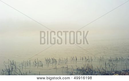 Landscape with fog over swamp